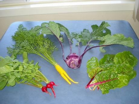 Radishes, Yellow Carrots, Purple Kohl Rabi, Rainbow Chard