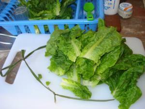 Lettuce Bundled with Grass Strands