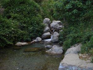 Watergarden 1