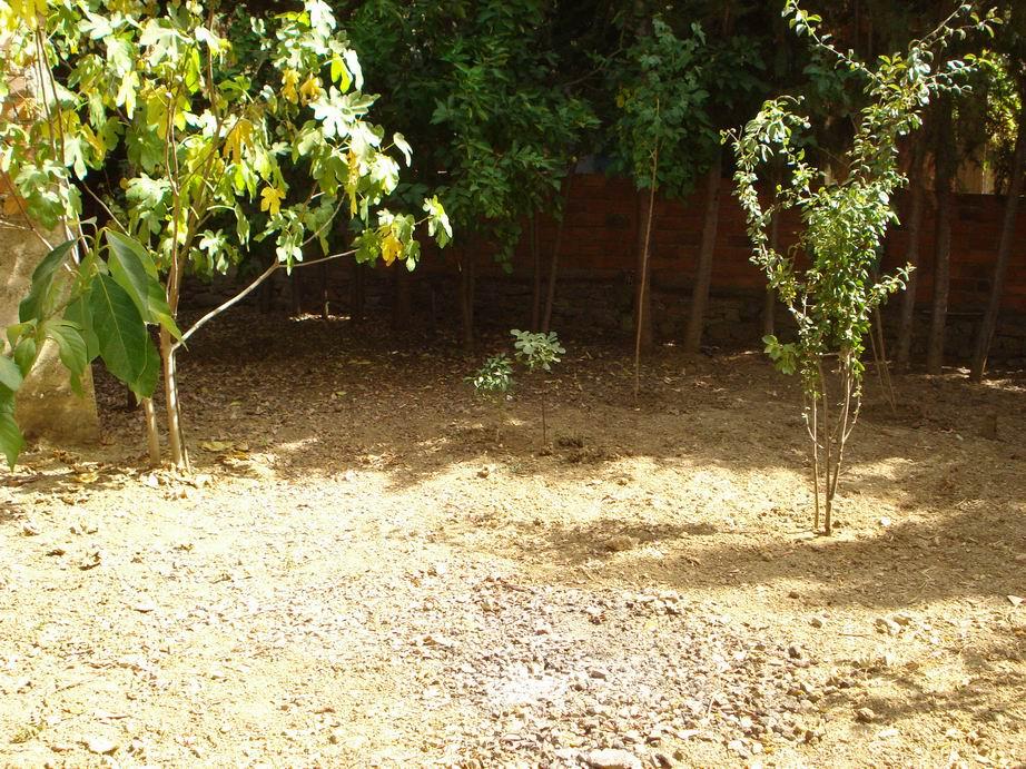 backyard garden in need of assistance