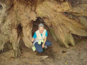 Alia inside Root System of Fallen Redwood