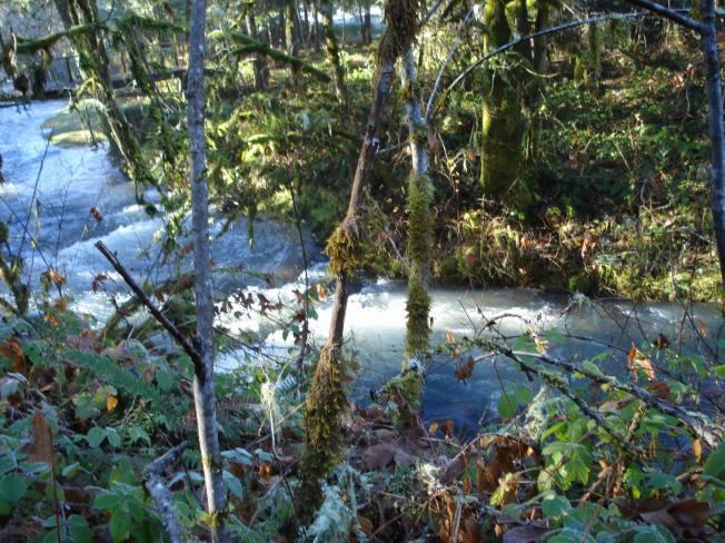 creek-view-2