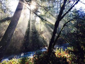 misty-sunlight-with-creek-and-forest