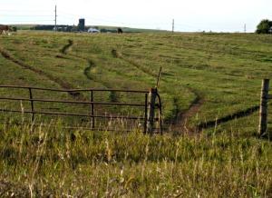 trails-through-pasture