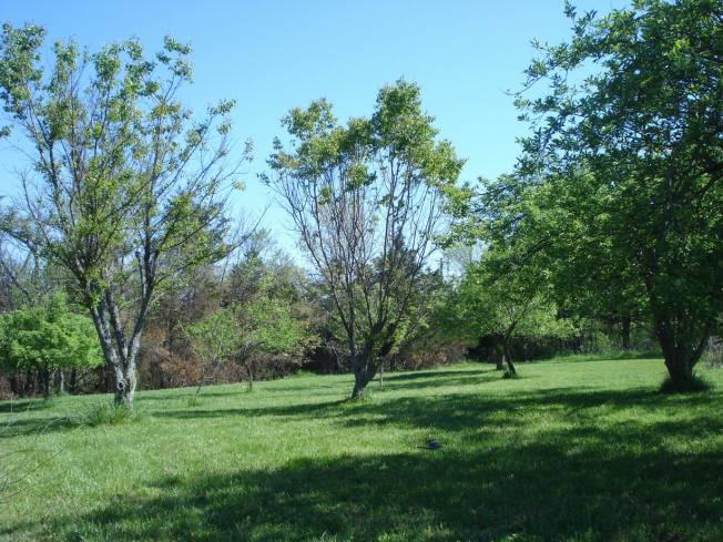 The Orchard at OMS - Open-air Meditation Sanctuary