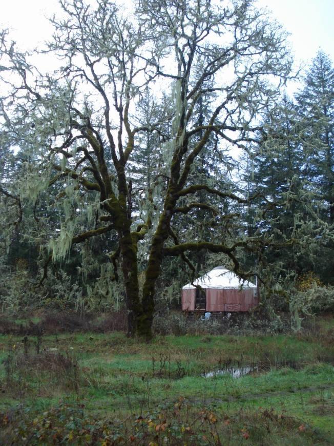 Sacred Yurt - Site of Solstice Celebration