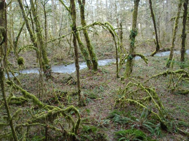 "The ""Creek Trail"" follows Anthony Creek. This part of the forest has a very primeval appearance."